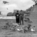 cliffhousebirds_wnp26-433