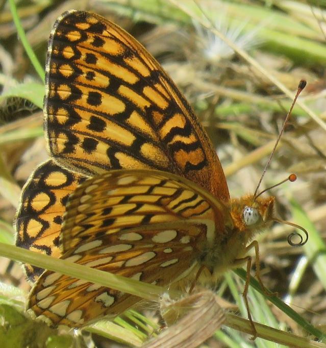 Butterfly 1 RSN 7-18-19