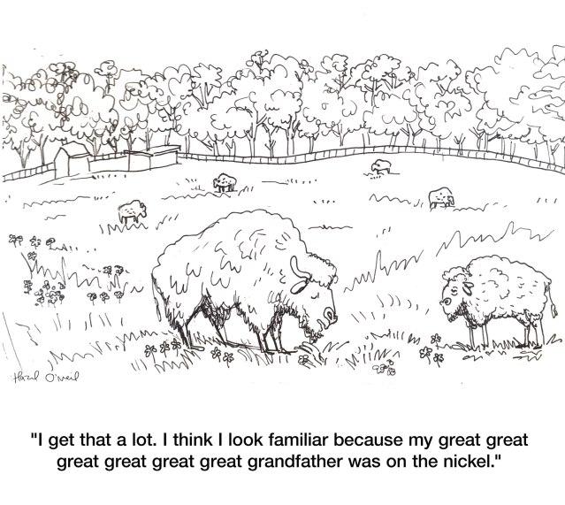 Bison_grandfather-nickel Hazel cartoon