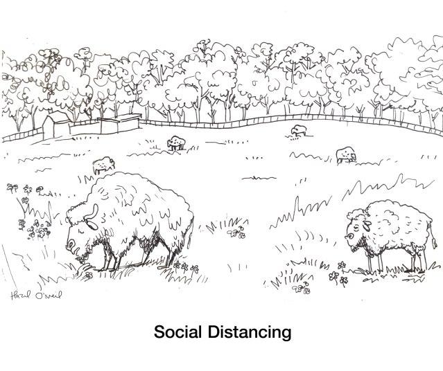 Bison_Social-Distancing cartoon Hazel
