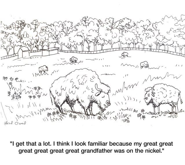 bison_grandfather-nickel-hazel-cartoon
